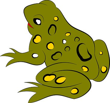 Frog, Animal, Wild, Amphibian, Jungle, Tropical, Macro