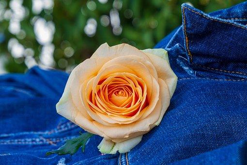Rose, Orange, Blossom, Bloom, Romantic, Love, Birthday