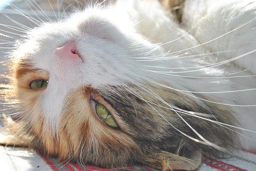 Cat, Dream Summer, The Sun, Animal, Nice, Kitten