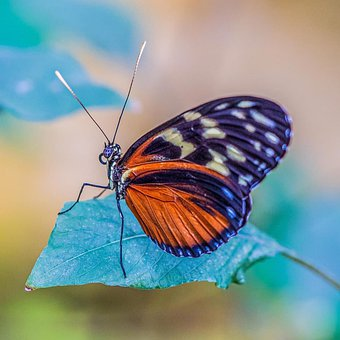Butterfly, Exhibition, Nature, Insect, Portrait, Macro
