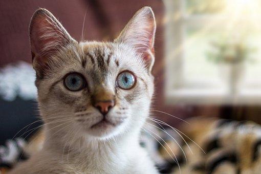 Cat, Mammal, Animal, Feline, Beautiful, Adorable, Tamed