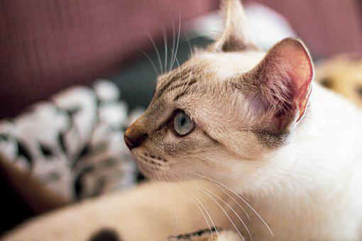 Cat, Feline, Beautiful, Small, Animals