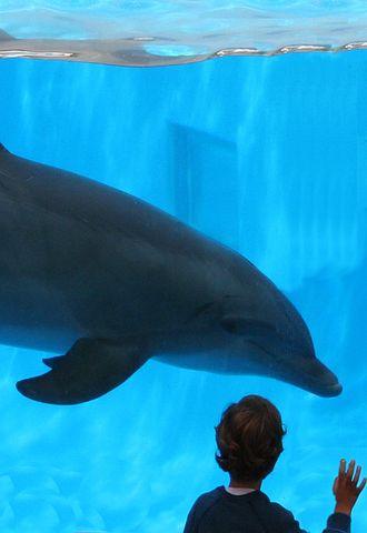 Dolphin, Dolphin And Boy, Friendship, Aquarium, Cetacea