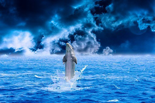 Dolphin, Sea, Water, Animal, Fish, Swimming, Blue