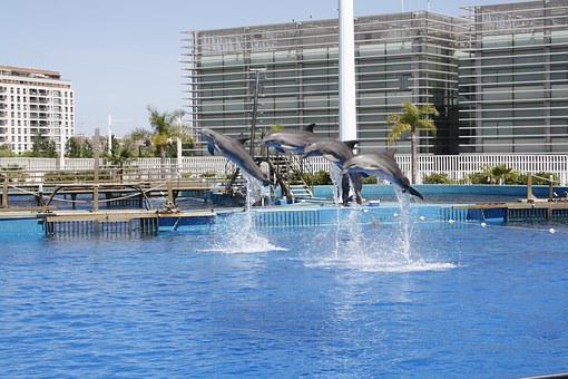 Dolphins, Dolphin Park, Valencia, Spain, Vacation
