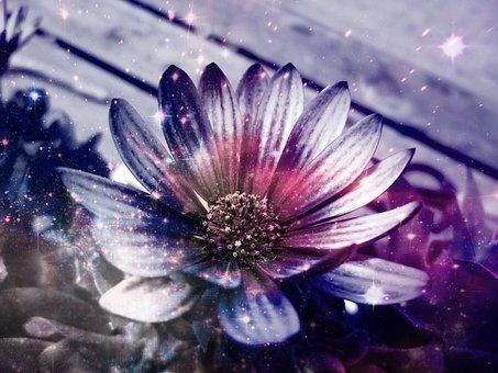 Flower, Light, Effects, Filter