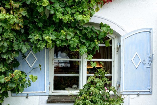 Window, Facade, Plant, Flower, Ingrowing, Ivy, Hauswand