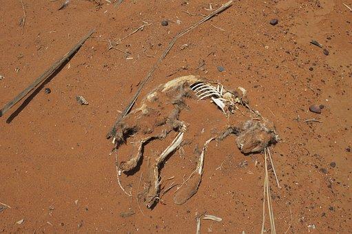 Desert, Feral, Cat, Dead, Skeleton, Nature, Wild