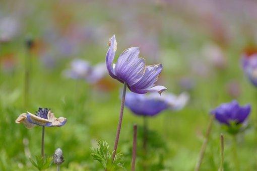 Flowers, Purple, Lilac, Nature, Nice, Purple Flower