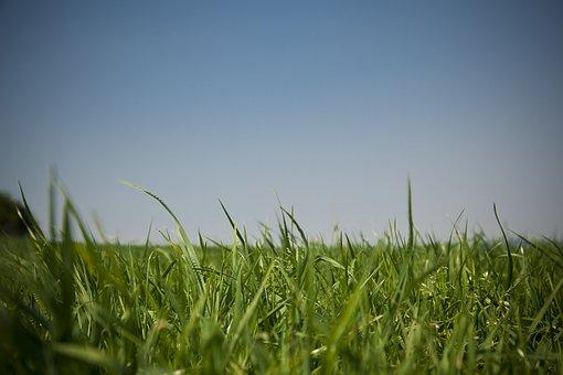 Meadow, Sky, Grass, Grasses, Nature, Landscape, Green