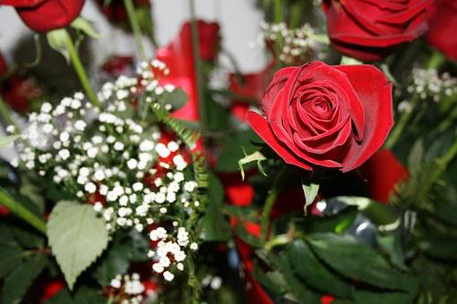 Rose, Red Roses, Flowers, Red, Love, Romance, Gift