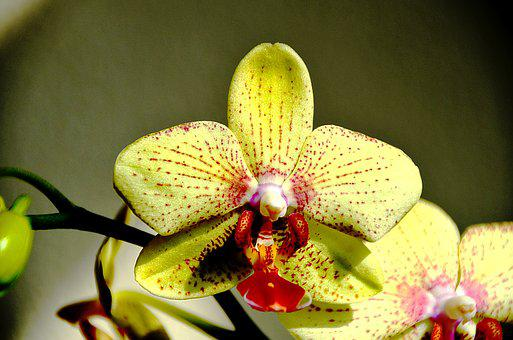 Orchid, Yellow Flower, Pink, Red, Flower, Nature, Color