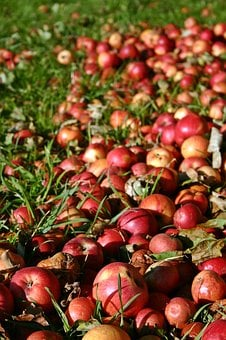 Apple, Red, Windfall, Autumn, Red Apple, Fruit