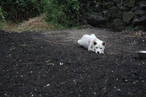 Puppy, Dog, Pet Dogs, Republic Of Korea, Progress