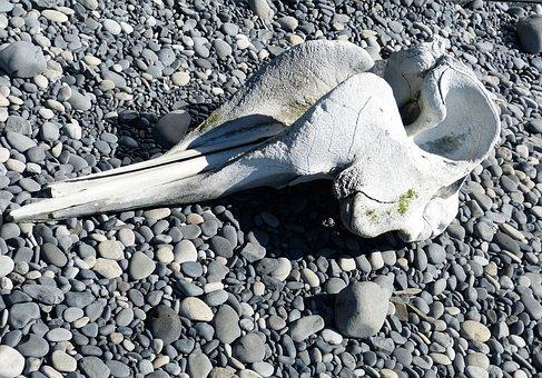 Iceland, Vik, South Coast, Nature, Lava, Beach, Skull