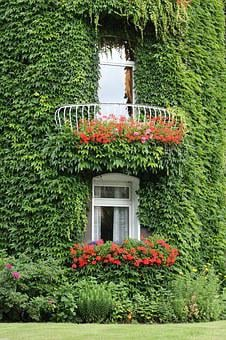 Ivy, Facade, Ivy Leaf, Window, Climber, Hauswand, Wall