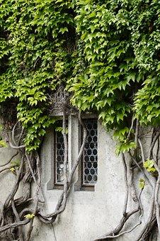 Window, Overgrown, Fouling, Wine, Wine Partner, Old