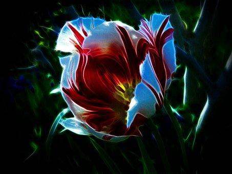 Tulip, Triumph Tulip, Rembrandt Tulip, Happy Generation