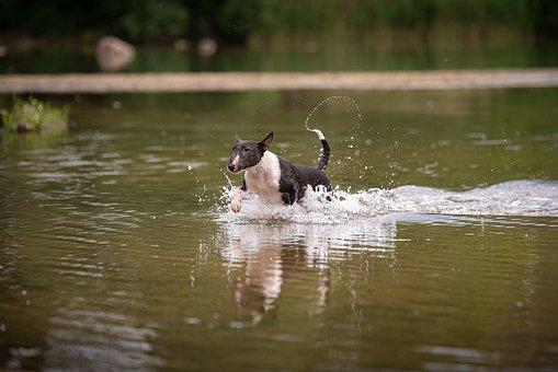 Dog, Water, Jump, Pet, Swim, Play