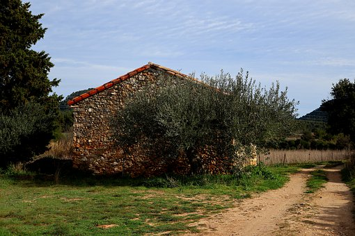 Architecture, House, France, South, Olive Trees