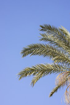 Palm, Tree, Tropical, Holiday, Summer