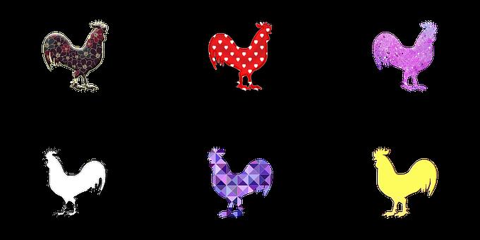 Chicken, Chicken Illustration, Chicken Drawing