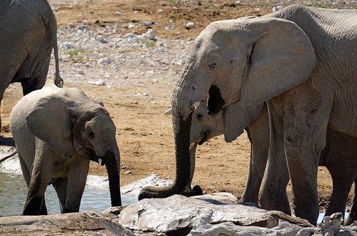 Namibia, Elephants, Big Five, Etosha, National Park