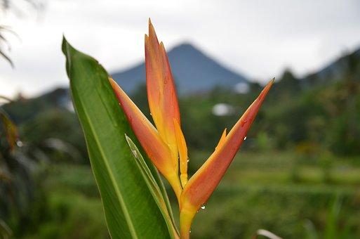 Plant, Mountain, Outdoors, Landscape, Bali