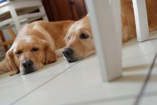 Dog, Sleep, Pet, Cute, Serenity, Tired, Nose, Animals