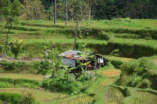 Barn, Shelter, Farm, Village, Bali