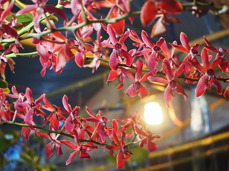 Nature, Flowers, Dare Wood