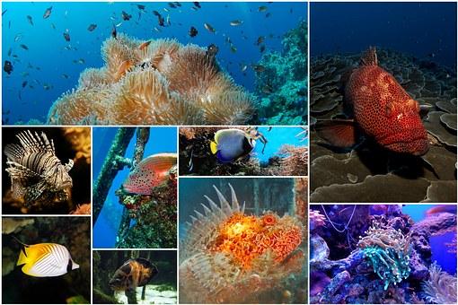 Fish Collage, Photo Collage, Underwater, Under The Sea