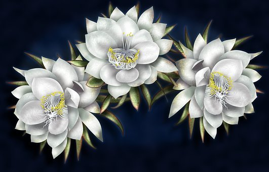 Queen Of The Night, White Flowers, Gorgeous, Night