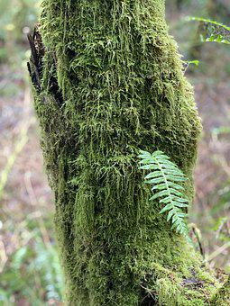 Fern, Moss, Green, Nature, Plant, Trees, Flora, Spring