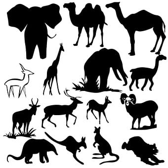 Animal, Monkey, Safari, Isolated, Outline, Trumpeting
