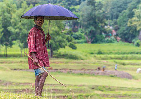 India, Tribe, Cow Keeper, Forest, Scenery, Landscape