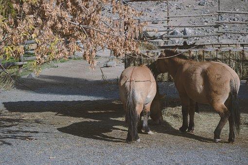 Armenia, Yerevan, Animal, Zoo, Travel, Tourism, Horse