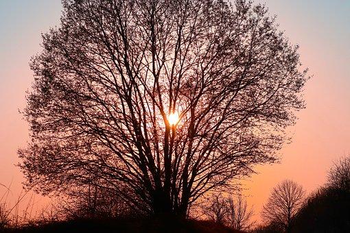 Tree, Silhouette, Kahl, Sunset, Evening, Abendstimmung
