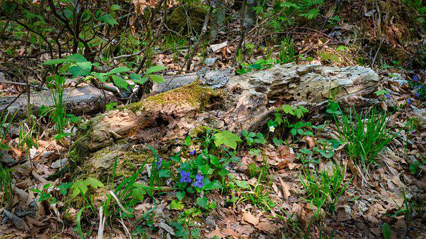 Growth, Spring, Log, Old, Plant, Shoots, Suckers