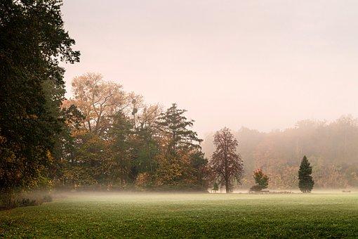 Forest, Polyana, The Fog, Landscape, Trees, Mystical