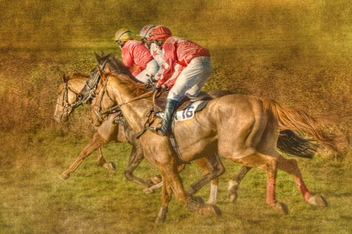Point To Point, Horse Racing, Black Forest Farm, Kenton