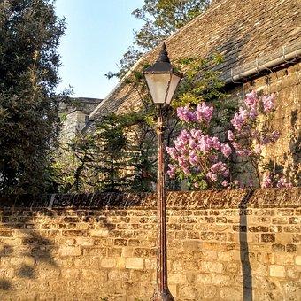 Lamp, Light, Wall, Purple, Flowers, Historic