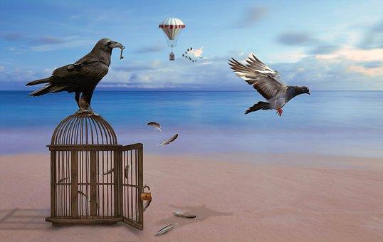 Raven, Cage, Dove, Castle, Key