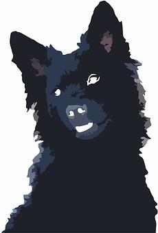 Hrvatski Ovcar, Croatian Shepherd, Croatian Sheepdog