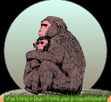 Monkey, Monkey With Cub, Cub, Young