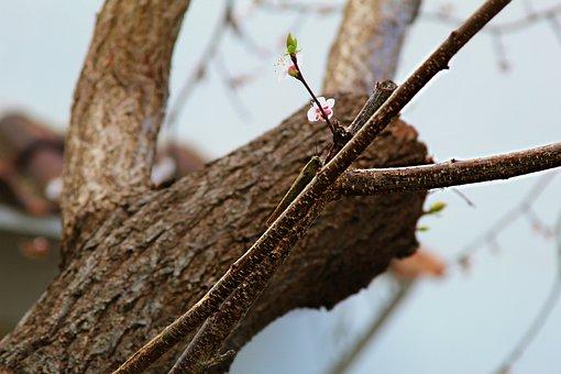 Grasshopper, On The Shaft, Habitat, Rest