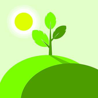 Plant, Green, Leaf, Nature, Spring