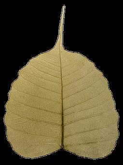Bodhi, Leaf, Wilted, Awakening