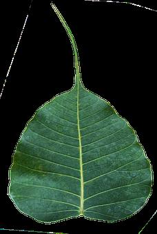 Bodhi Leaf, Awakening, Enlightenment