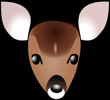 Deer, Fawn, Face, Head, Baby, Animal, Grazer, Wildlife